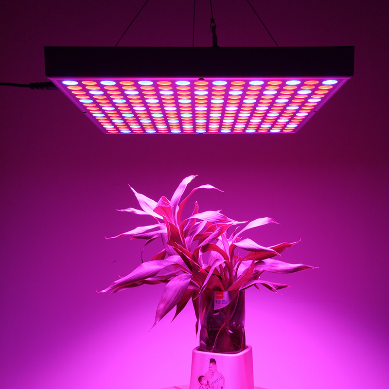Wholesale 45W LED Grow Light (225 LED Lights, Blue + Red, 2160 Lumens, Energy Efficient)
