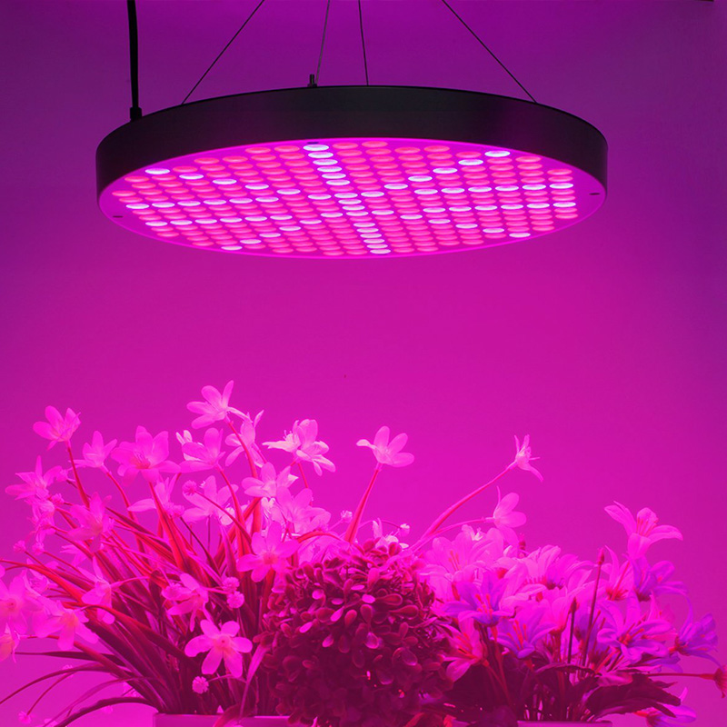 Wholesale 50W LED Grow Light (250 LED Lights, 2950 Lumen, Red + Blue + UV + IR)